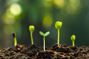 Seeds or Seedlings